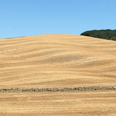 Wheat fields marked by cutting and subsequent ploughing