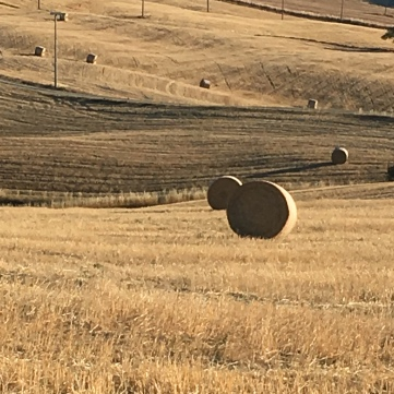 Hay rolls dot the golden valley